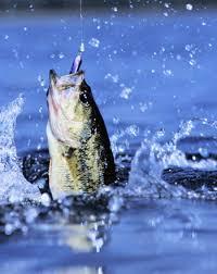 bass fishing photos