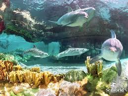 3d dolphin wallpaper