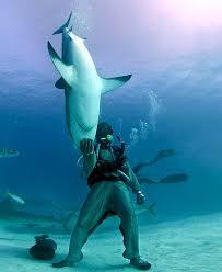 swim with great white shark