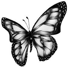 clip art of butterfly