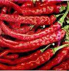 african pepper