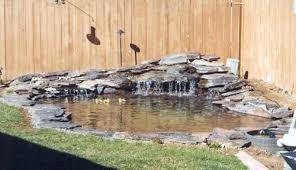 backyard duck pond
