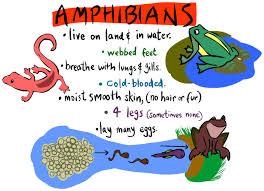 all amphibians
