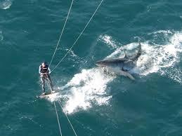 shark attach