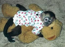 baby pet monkeys