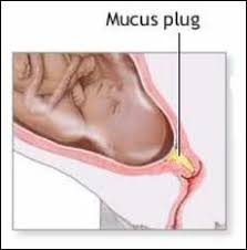 mucous plug pictures