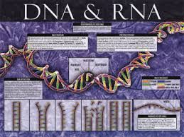 pictures of dna and rna