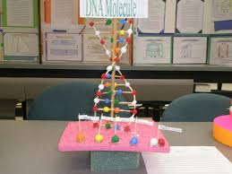 dna model science projects