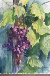 grapes paintings