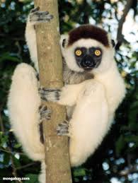 madagascar island animals
