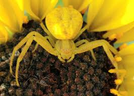 yellow and orange spider