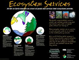 conservation of ecosystem