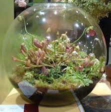 indoor terrarium