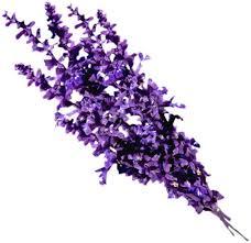 photos of lavender