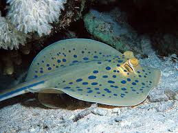 pictures of sea creatures
