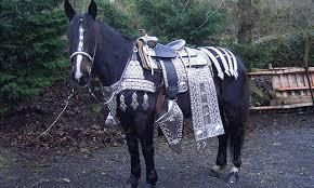 parade saddle