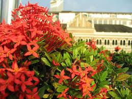 bushy flowers