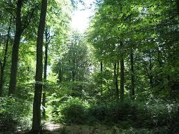 Abingdon skov