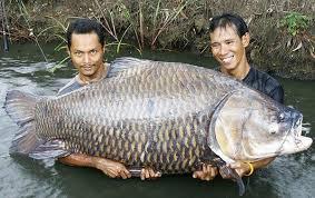 huge fish pic
