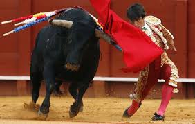 bullfighter pictures