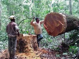 antique logging tools