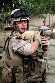 marines dog