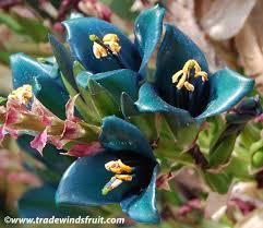 aqua colored flowers