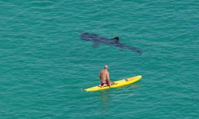 shark spotted