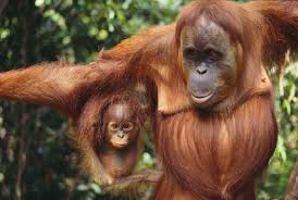 animals of the tropical rain forests