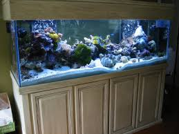 180 gallon reef aquarium
