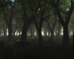 dark woods wallpaper
