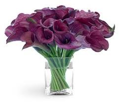 burgundy lily