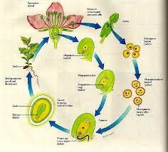 cycle plants