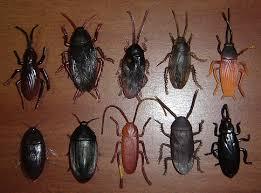 bugs roaches