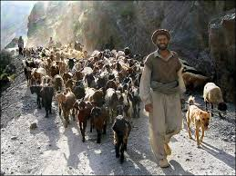 animals of pakistan