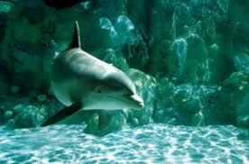 dolphin environment