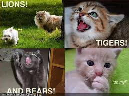 funny pictures of lions