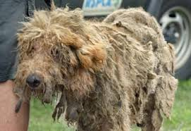 neglected dog