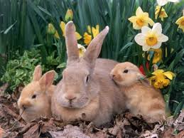 photos rabbits