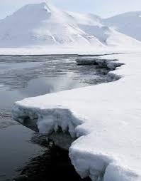 arctic habitats