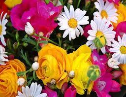 http://t0.gstatic.com/images?q=tbn:zYZwx0M0fqeB0M:http://www.saidaonline.com/newsgfx/flower55-saidaonline.jpg