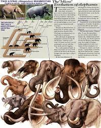 extinct elephants
