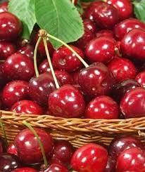 cherry plants
