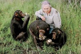 images of jane goodall