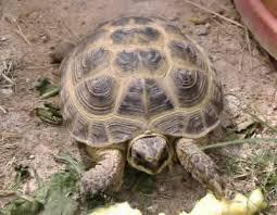 tortoises reptiles