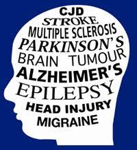 neurological brain