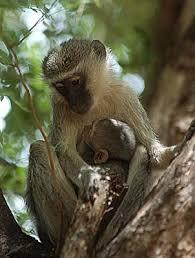monkeys habitat