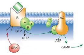 g protein receptor