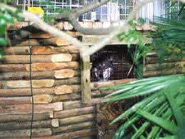 log cabin dog houses
