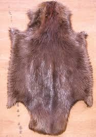 beaver skins